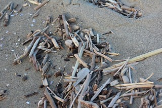 frammenti spiaggiati