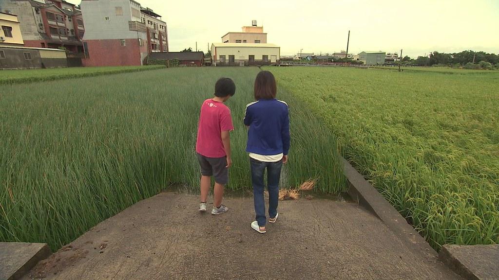 929-2-12劉育育和林秀芃去年試圖復育一小塊藺草田。