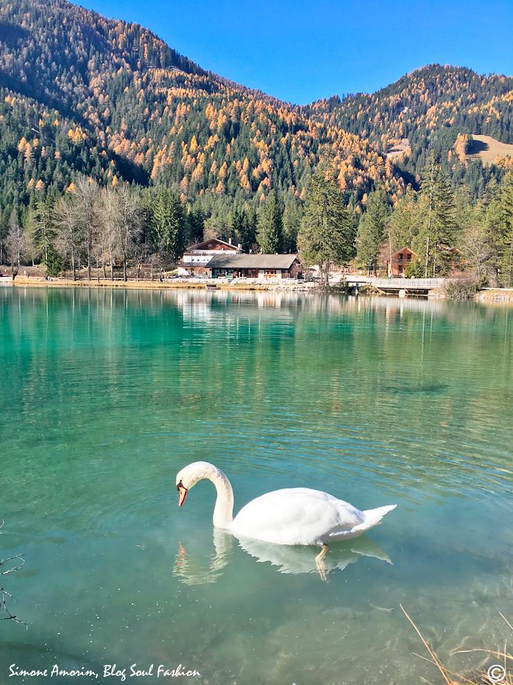 O lugar ainda tem lindos cisnes