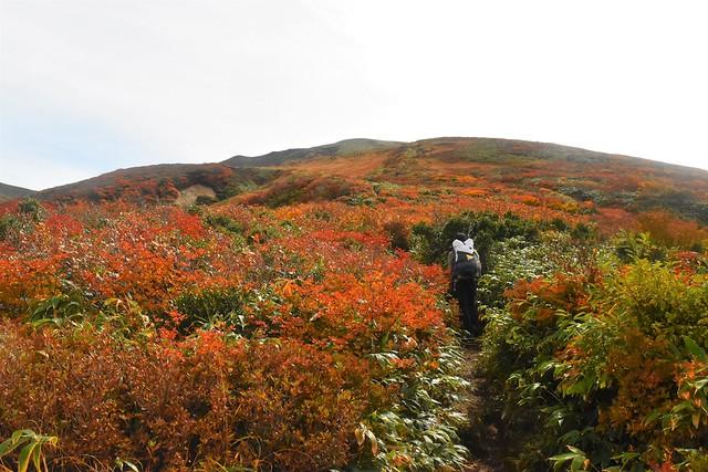 以東岳登山 直登コースの紅葉風景