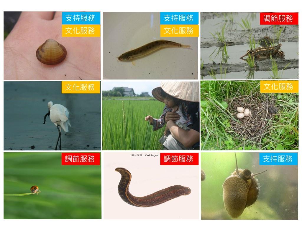 田間生物服務。圖片來源:農田裡的科學計畫。