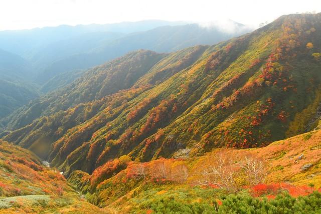 朝日連峰 谷底の紅葉