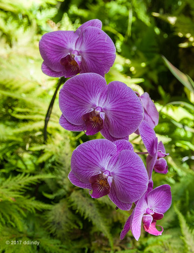 Orchid 14:03b | by ddindy