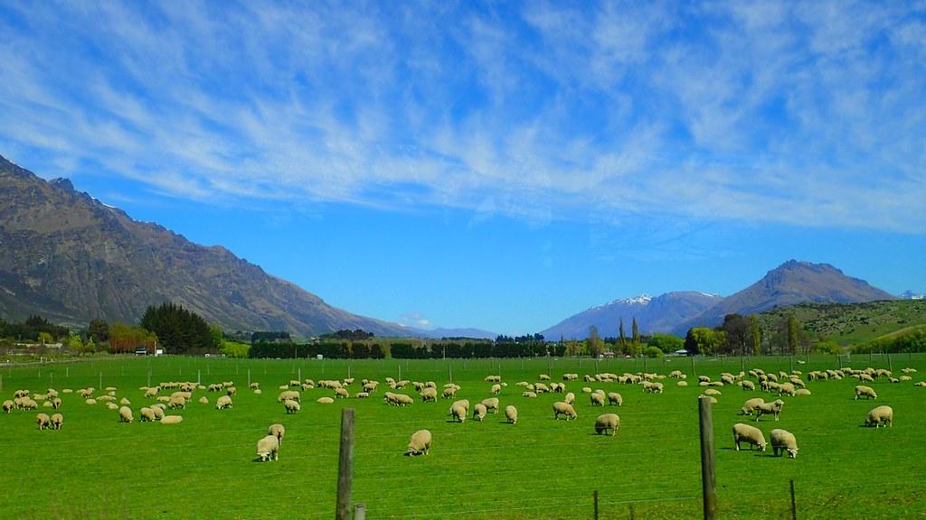 紐西蘭約有4分之3的原始林在歐洲人抵達後被伐除