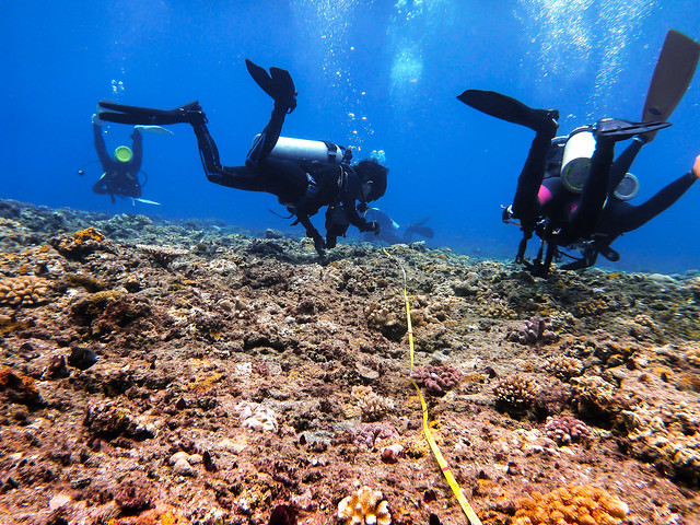 珊瑚礁體檢
