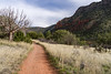 Coconino National Forest, Title: Bell Trail - used on page: Why People Seek Counselling or Psychotherapy