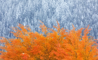 Frost & Fire | by Ania Tuzel Photography