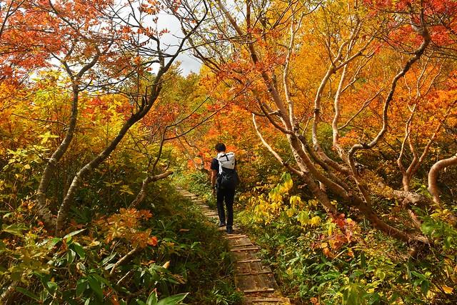 鳥原山の木道路