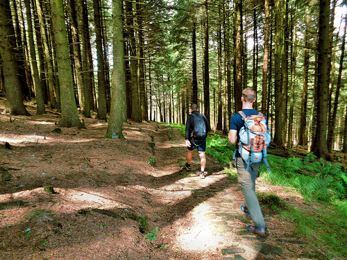 Walking through Fell Wood