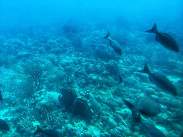 Fondos coralinos en Barbados (Crucero a las islas del Caribe)