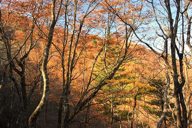 御正体山の紅葉