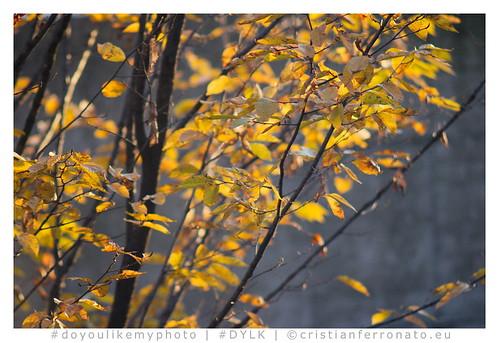 flickr EOS 750d + Sirius 80-200 ƒ3.9....