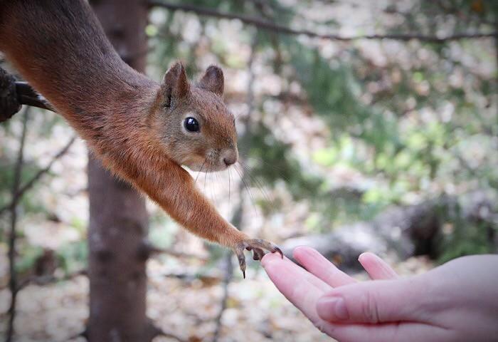 The creation of adam, squirrel