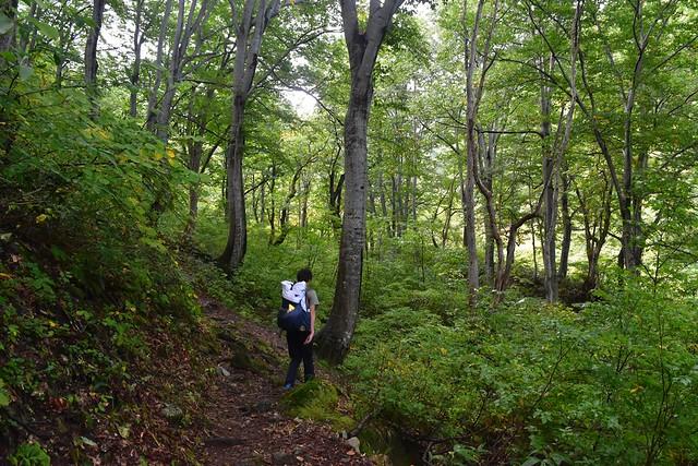朝日連峰 ブナの森