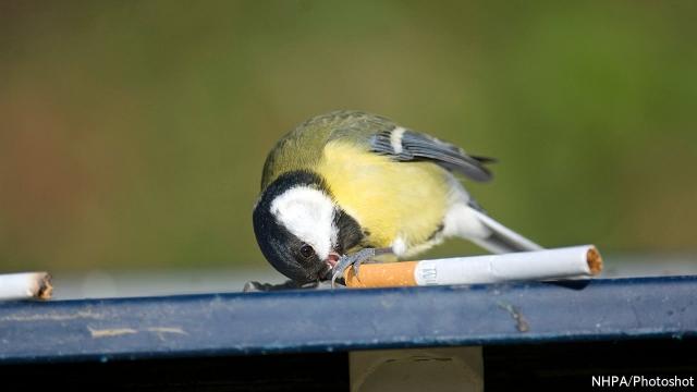 Птицы и сигареты