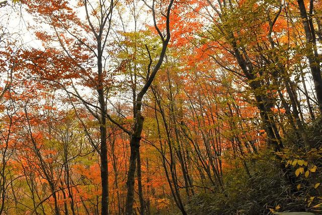 石割山の紅葉