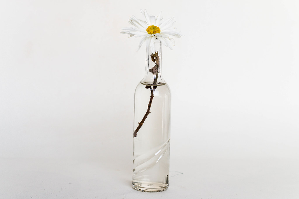 Small Glass Vase With Flower Stock Photos Fotos Downl Flickr