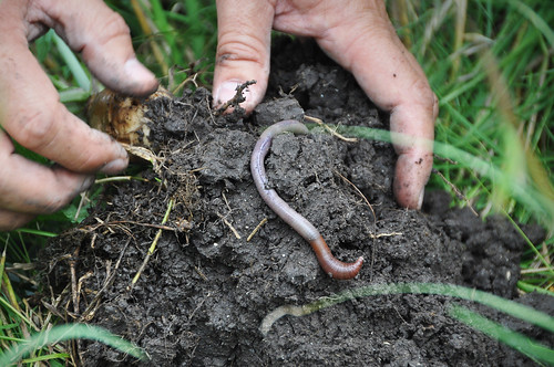 A person's hands in soil with a worm