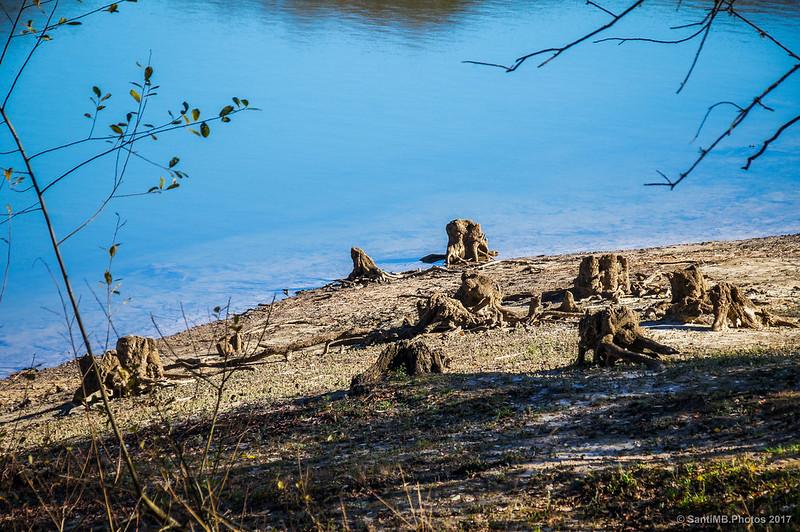 Raíces de árboles en la orilla del Lago Lareo