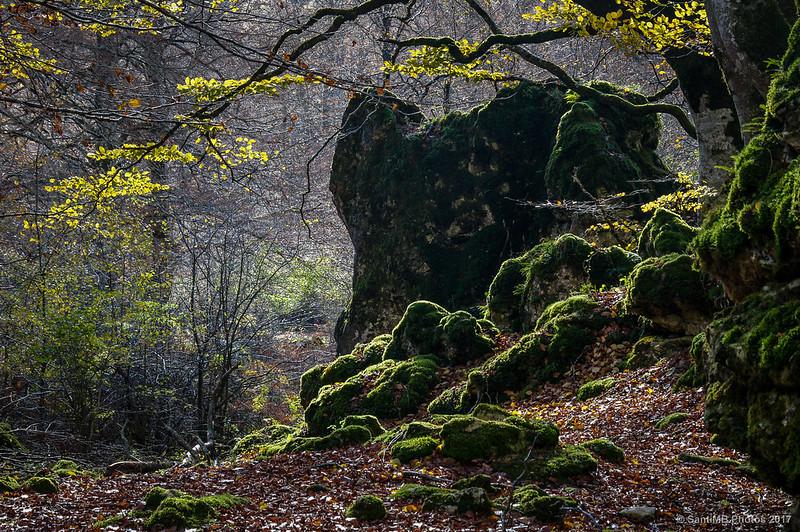 En el bosque de Urbasa