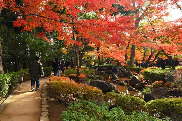 大田黒公園 日本庭園の紅葉