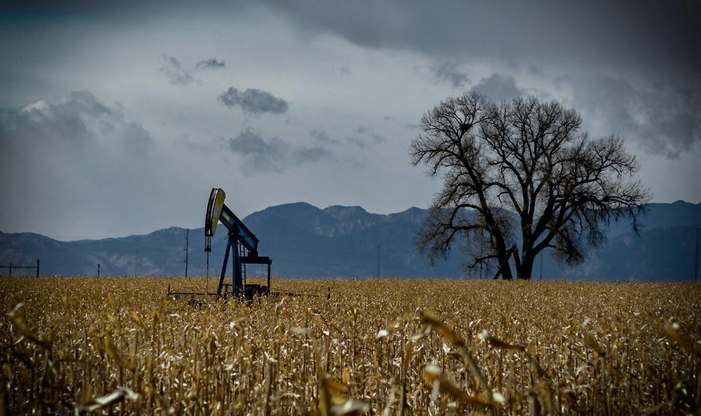 Pumphorse and Tree: Weld County, Colorado