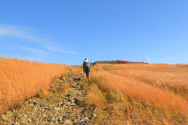 朝日連峰 稜線の草紅葉
