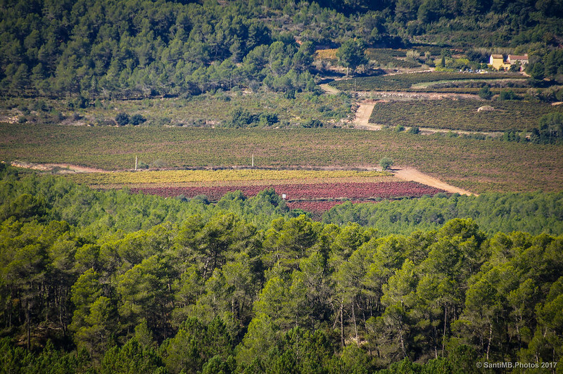 Viñedos rojos de Aiguaviva desde Marmellar