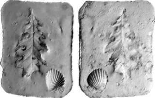 (fig.3 Smulazione del processo di fossilizzazione con gesso.)