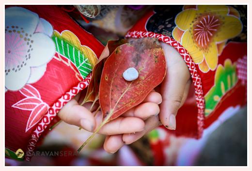 愛知県瀬戸市の深川神社で兄弟揃って七五三詣り フォトスタジオとは違う自然でおしゃれなロケーション撮影
