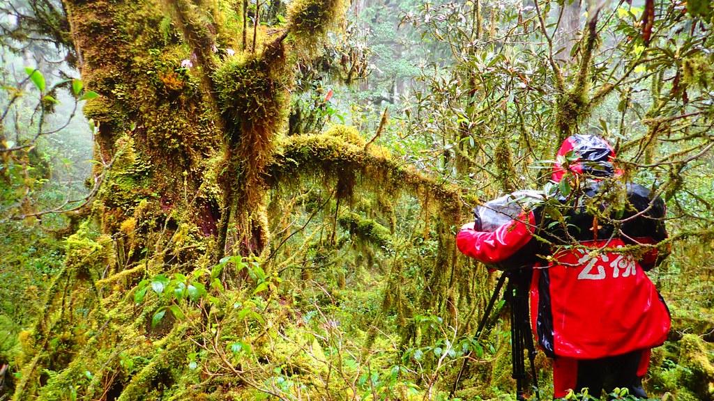 棲蘭的雲霧林美則美已,只能說在這樣的氣候下工作真是自討苦吃。圖片來源:楊嘉君。
