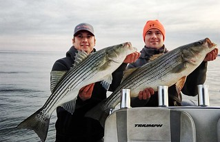 Photo of a pair of striped bass held by two brothers