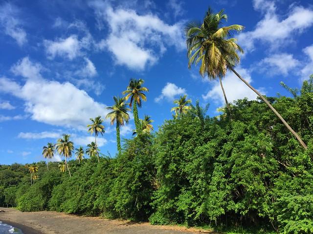 Playa salvaje en San Vicente y las Granadinas que aparece en Piratas del Caribe