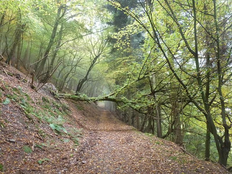 Klettersteig Riol : Rioler klettersteig & fünfseenblick unterwegs im trierer land