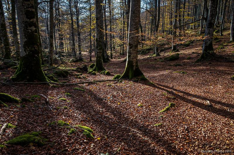 Bosque en Urbasa