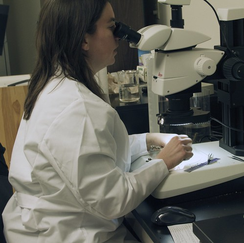 Research Ecologist Jacqueline Ott studying a below-ground bud on a microscope at the USFS-RMRS Forest and Grassland Research Laboratory
