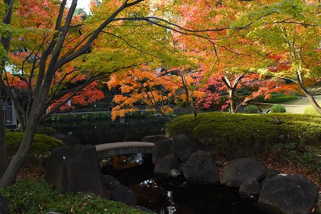 大田黒公園 紅葉と小川