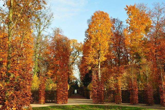 Gartenreisen ... Schwetzinger Schlossgarten im November 2017 ... Flammende Herbstfarben ... Foto: Brigitte Stolle