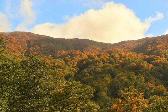 以東岳稜線の紅葉