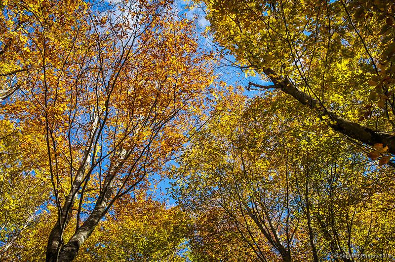 Hayedo de Aralar en otoño