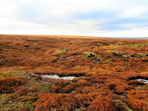 More open moorland