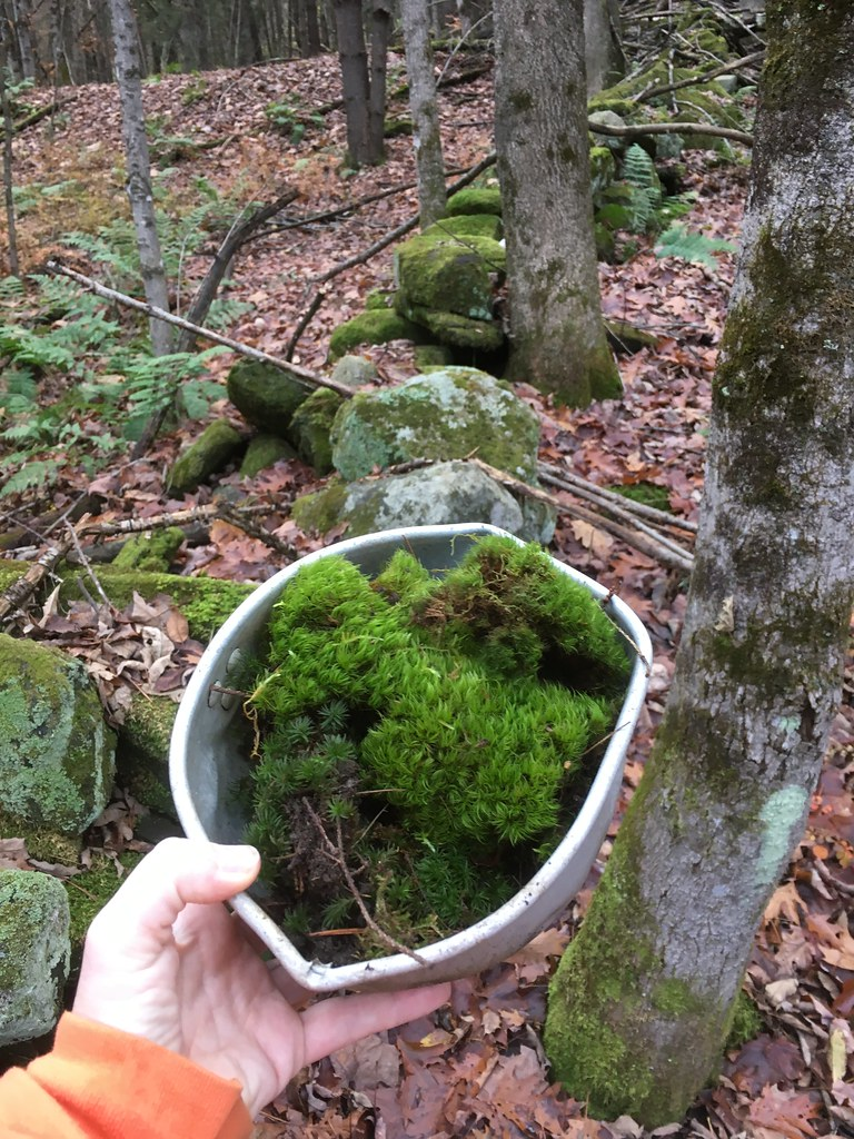 Gathering Moss A Natural And Cultural History Of Mosses Pdf