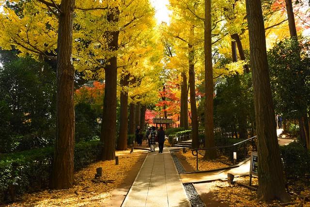 大田黒公園 銀杏並木と紅葉