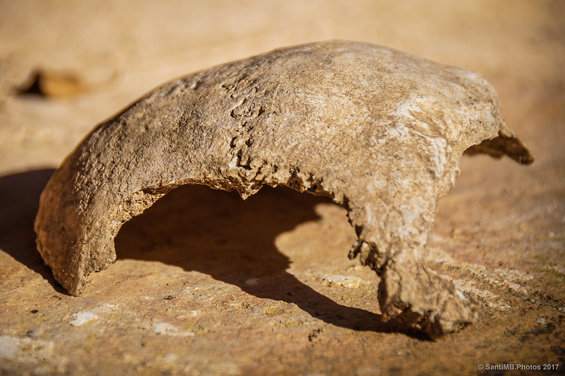 Restos humanos en el cementerio de Marmellar