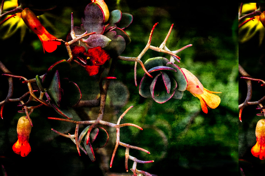 Tangle: abstract cactus flower