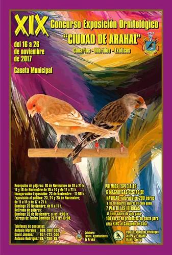 AionSur 26611048449_727fae2dff_d Arahal, sede de la afición andaluza a la ornitología durante el mes de noviembre Arahal