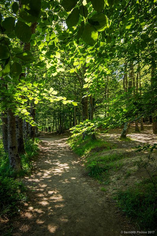 Camino del pantano de Santa Fe de Montseny
