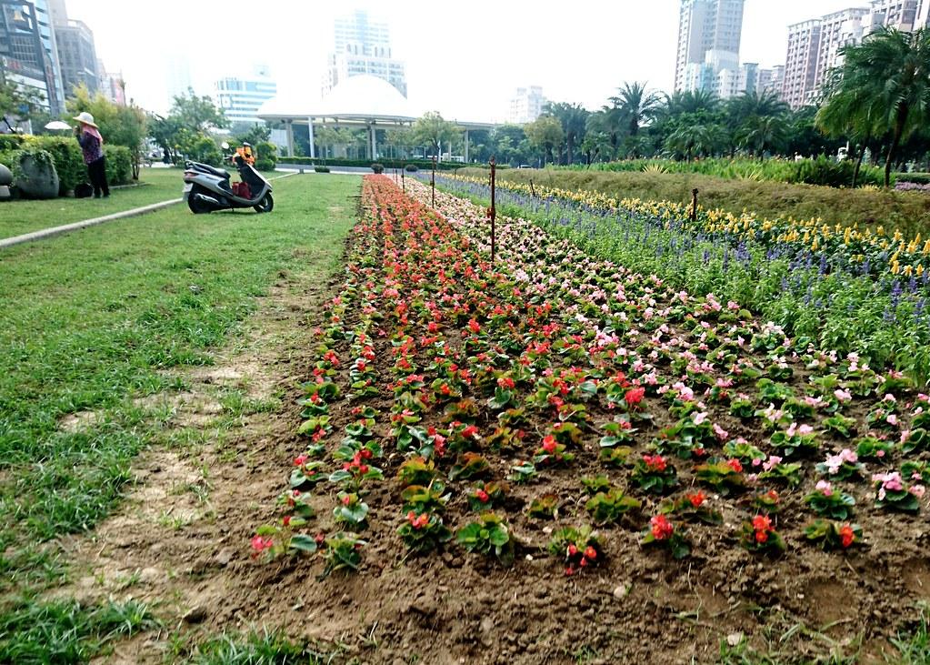 南食盟認為,市府每年花費公帑整理公園花圃,應該開放民眾認養種菜,打造可食地景。攝影:李育琴。