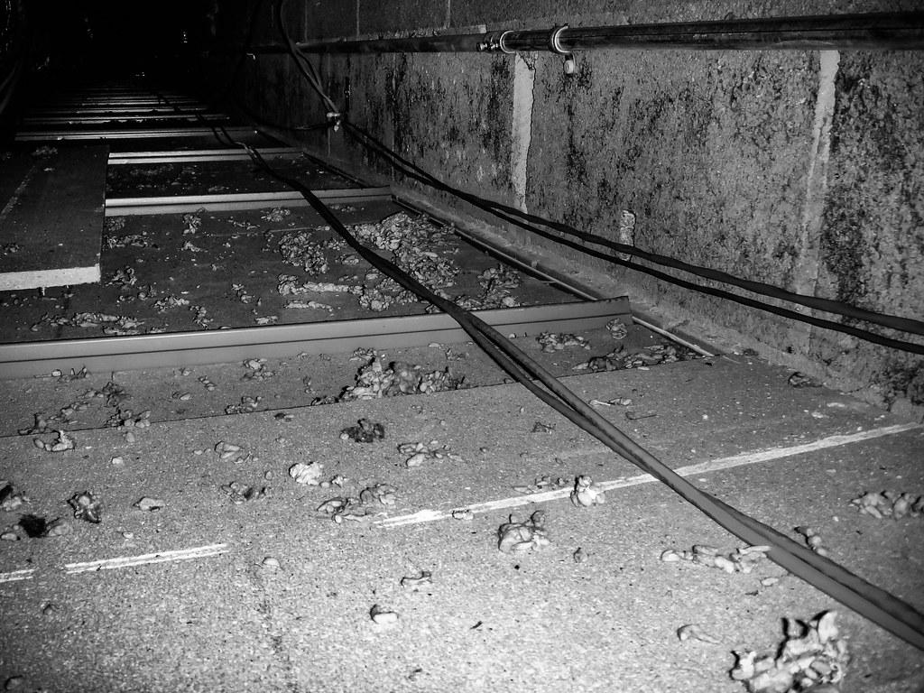 Asbestos Fireproofing Debris On Suspended Ceiling Tile Flickr