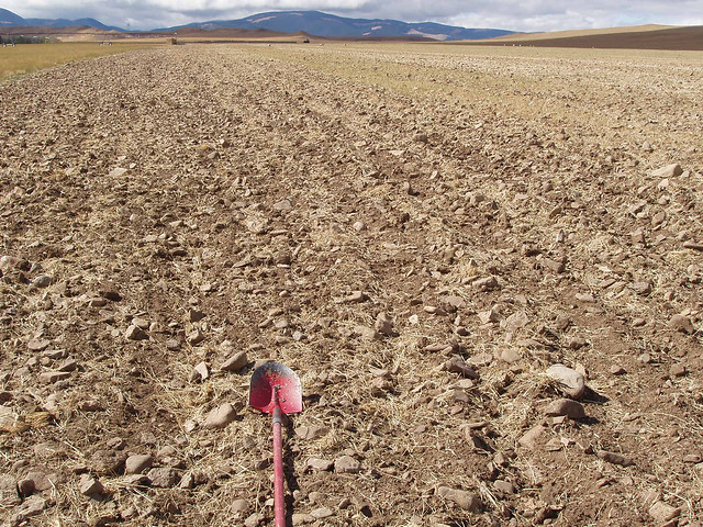 Tilled rocky farmland soil in Montana.